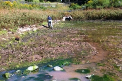 pond_planting