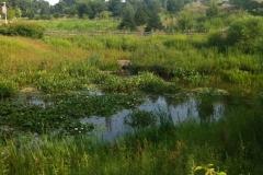 pond_planting_after